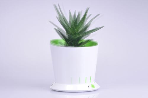 planta bergignat