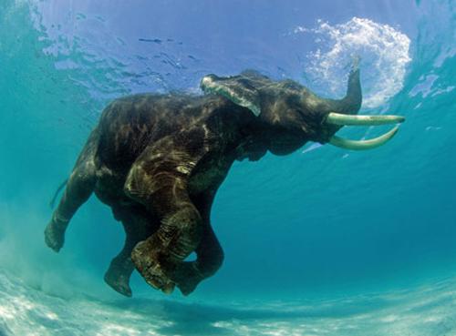 animales_bajo_el_agua