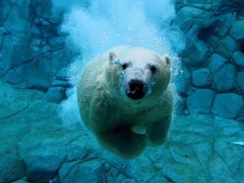 Animales en el agua en Buena definicion [Imagenes!]